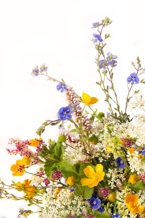 fields of flowers: Bouquet of flowers of field and meadow flowers on a white background. Stock Photo