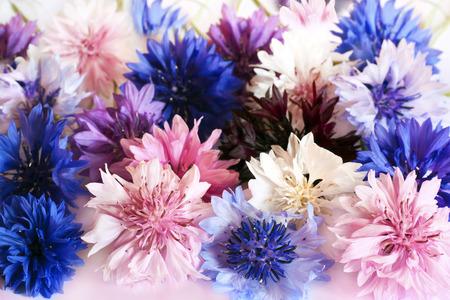 champ de fleurs: Champ et Meadow Fleurs Cornflowers différentes couleurs. Banque d'images