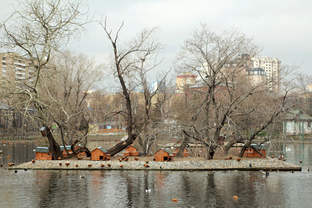 housing lot: The habitat of ducks orange color at the city zoo in the fall. Stock Photo
