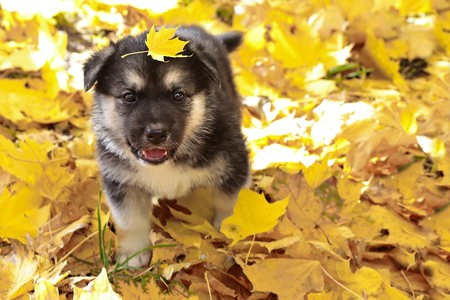 Leaves a little puppy on his head.