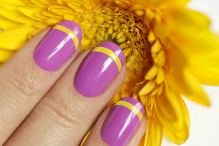 Lilac French manicure with yellow Gerbera close-up. Nail art.