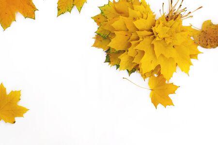 Herbstzusammensetzung von Ahornblättern. Gelbes Blatt auf weißem Hintergrund. Standard-Bild