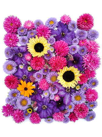 Beautiful collection of sunflower flowers, asters and clematis lilac, pink flowers.