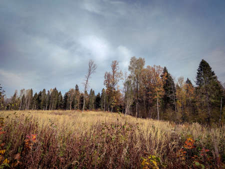 Landscape of fields and forests in the distance during the autumn period. Фото со стока