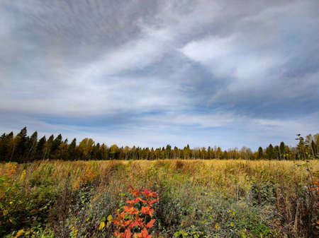 Landscape of fields and forests in the distance during the autumn period. Zdjęcie Seryjne