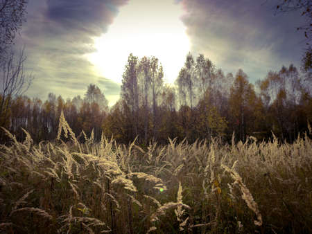 Autumn landscape with field, trees and sunlight in the sky with clouds in October. Фото со стока