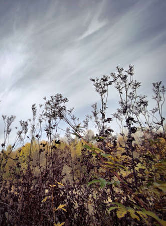 Field and meadow vegetation in autumn in October.