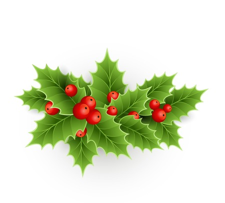 Vector Christmas holly with berries. EPS 10 Vector
