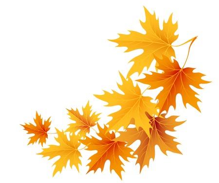 Autumn leaves arrière-plan.