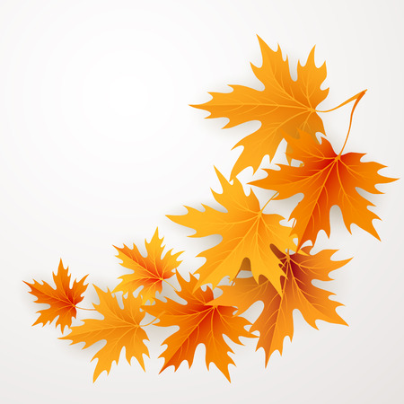 golden border: Autumn maples falling leaves background. Vector illustration.