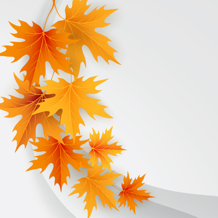autumn leaves background: Autumn maples falling leaves background. Vector illustration.