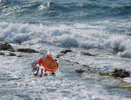 wzburzone morze: A biała muszla na plaży nieobrabiane morza