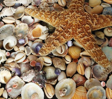 alluvial: A beauteful alluvial of different Mediterranean seashells and a starfish