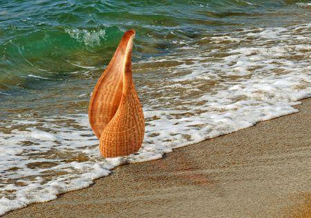 wzburzone morze: A muszla na plaży nieobrabiane morza