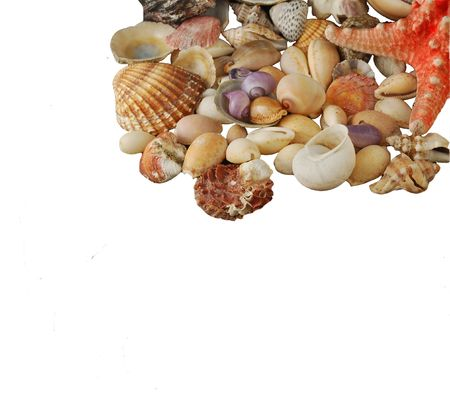 alluvial: A beauteful alluvial of different Mediterranean seashells and a red starfish