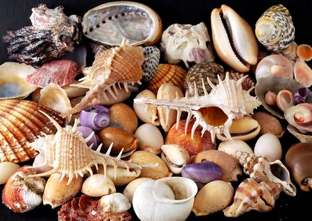 gastropoda: A beautiful alluvial of different Mediterranean seashells