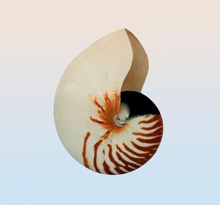 mollusca: nautilus isolated on background