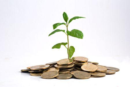 economia: �rbol de la creciente pila de monedas