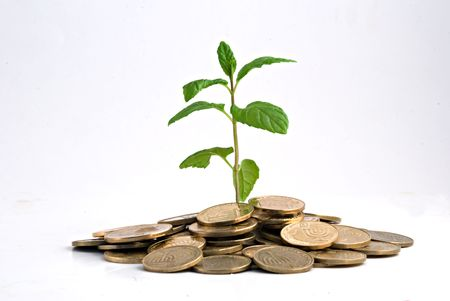 Tree growing from pile of coins Stock Photo