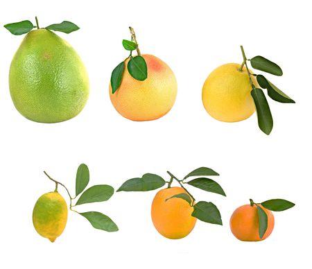 Pamelo, tangerines, grapefruits and orange isolated on white background Stock Photo - 4025713