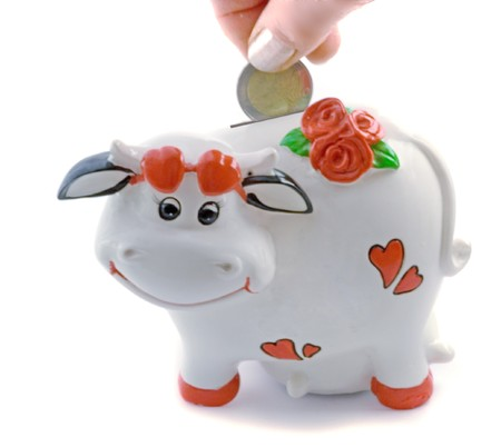 A cow the money bank  isolated on white background photo