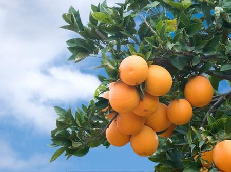 Tak met rijpe oranje