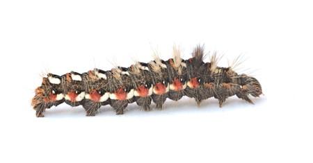 Caterpillar isolated on white background Stock Photo