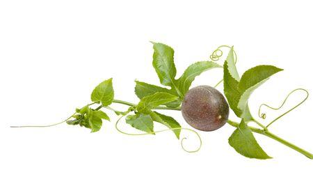 Passiflora isolated on white background photo