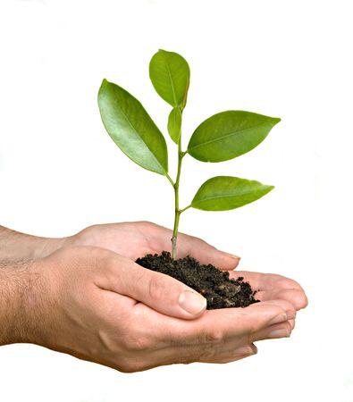 arbol de problemas: Un brote en palma de la mano como s�mbolo de la protecci�n de la naturaleza