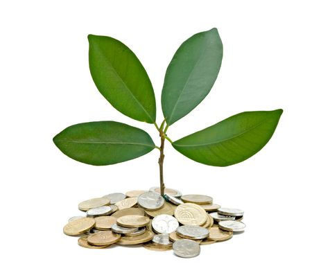 forestation: Tree growing from pile of coins Stock Photo