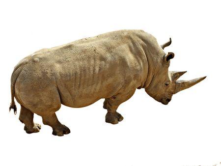 an ungulate: Rhinoceros isolato su sfondo bianco Archivio Fotografico