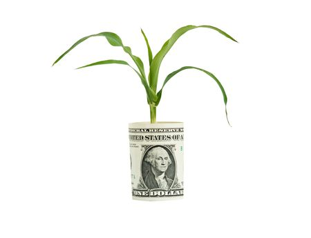 Wheat growing from folded dollar bill photo