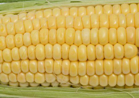 corn ear: Mazorca de ma�z Foto de archivo
