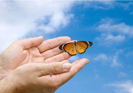 arthropoda: Monarch butterfly in hands
