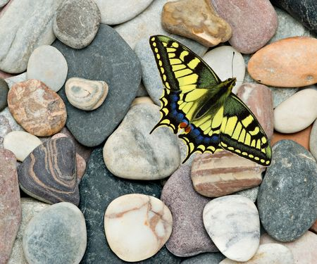 a beautifu swallowtaill butterfly  photo