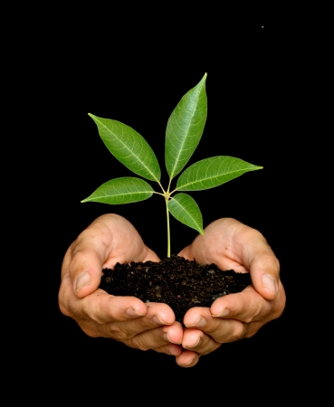 A sprout in palms as a symbol of nature protection Stock Photo - 5257863