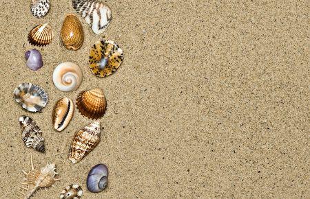 alluvial: A beauteful alluvial of different Mediterranean seashells  Stock Photo