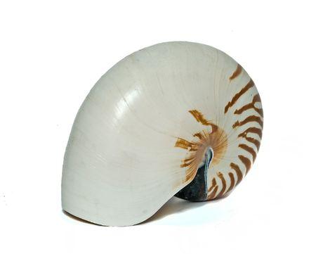 mollusca: nautilus shell isolated on white background