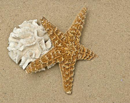 calcium carbonate: coralli e stelle marine sulla spiaggia di sabbia