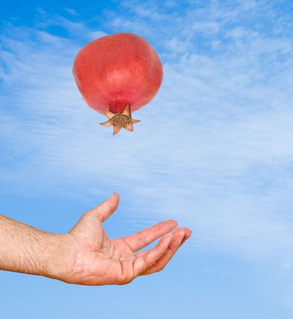 superfruit: Pomegranate falling from sky to hands  Stock Photo