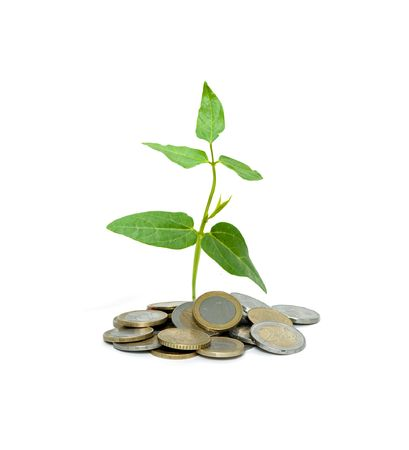 Shoot growing from pile of coins photo