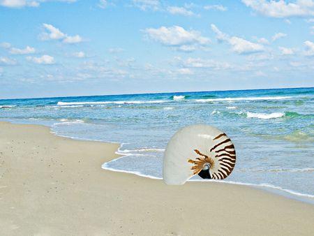 mollusca: nautilus shell on sea beach
