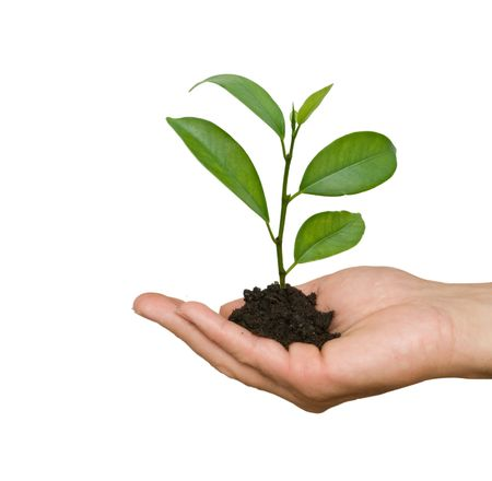 A sprout in palm as a symbol of nature protection Stock Photo - 5671849