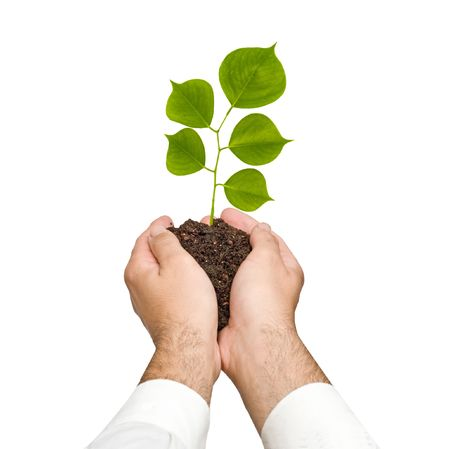 A sprout in hands as a symbol of nature protection Stock Photo - 5728662