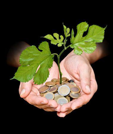 dinero euros: Mano con árbol crece desde el montón de monedas  Foto de archivo