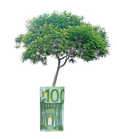 Tree growing from euro bill photo