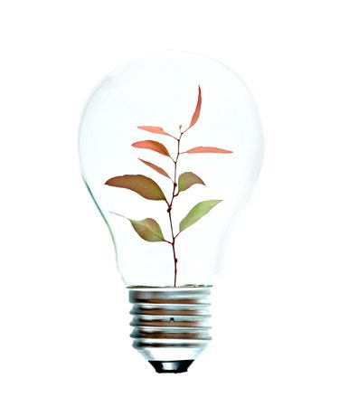 Incandescent light bulb with a tree shoot as the filament Stock Photo - 6124959