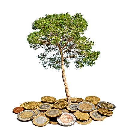 Pine tree growing from pile of coins photo