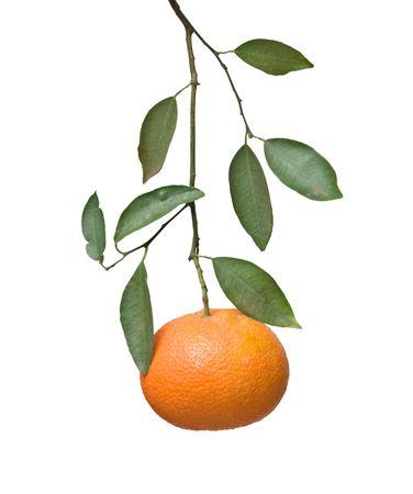 Tangerine on branch Stock Photo - 6640872
