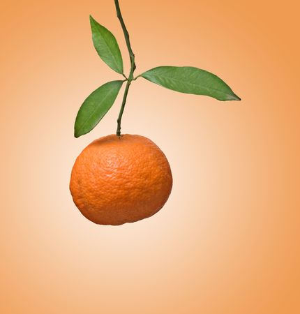 Tangerine on branch Stock Photo - 6641110